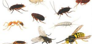 رش مبيدات ومكافحة حشرات