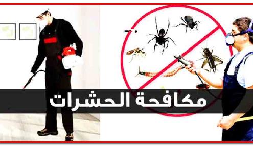 مكافحة الحشرات المنزلية بافضل الطرق