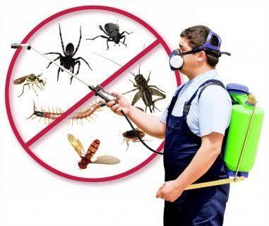 خدمات رش المبيدات الحشرية